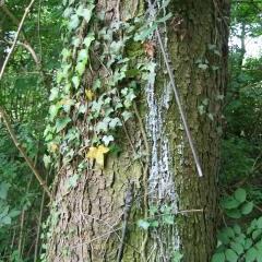 Baum mit Blitzableiter